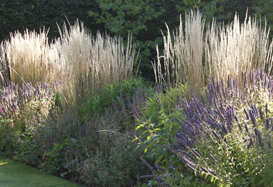 the planted border in summer features calamaglostis grasses