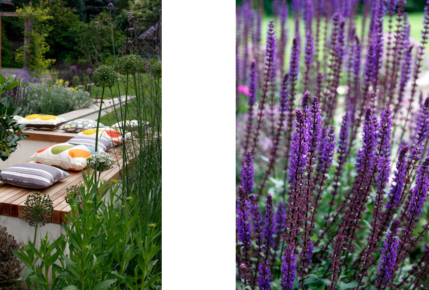 purple and yellow themed planting scheme by greencube garden design in sevenoaks, kent